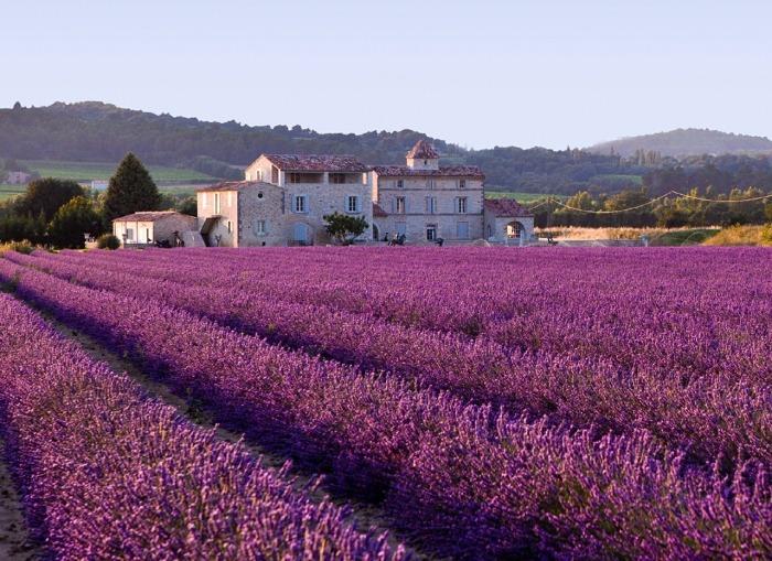 lavender-field-616440_1280