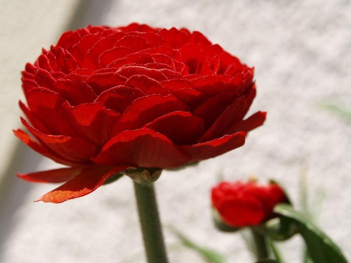 flower-1286362_1920