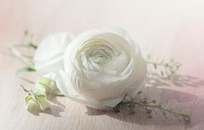 flower-1354703_1920