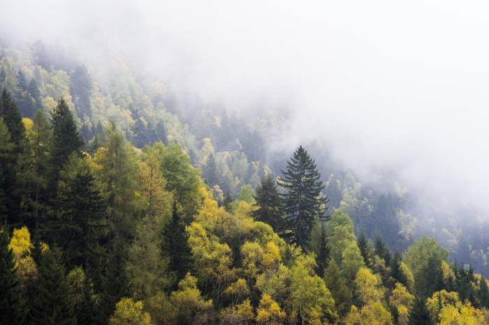 forest-1031477_1920