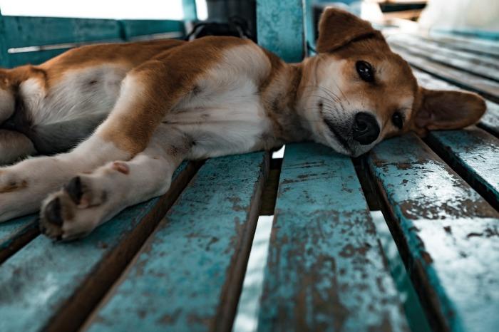 puppy-1149426_1920