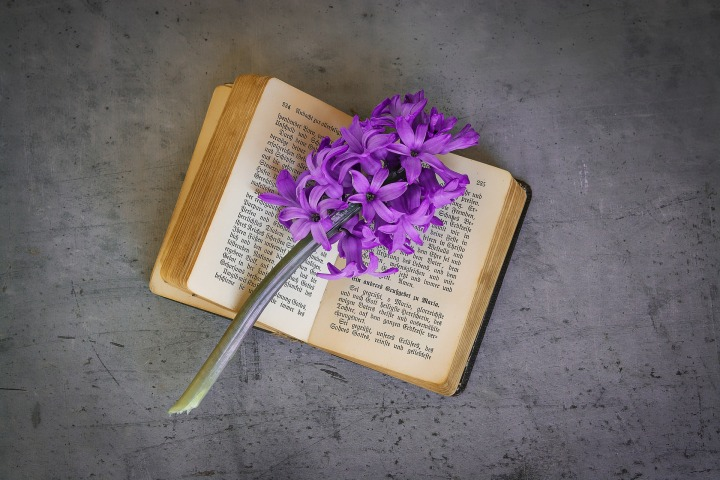 book-1357344_1920