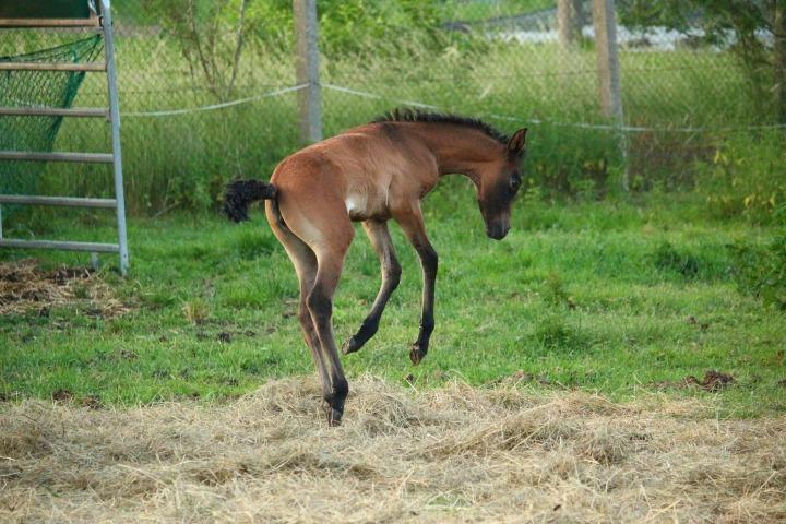 horse-1442794_1920