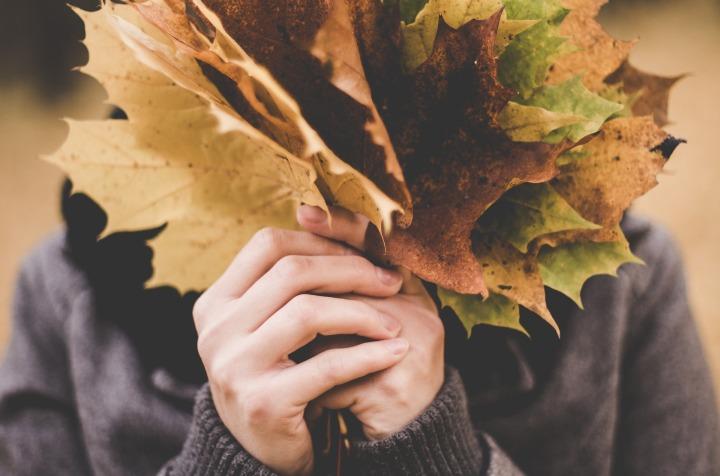 maple-leaves-1030957_1920