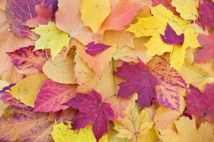 autumn-leaves-1789665_1280